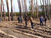 Древесина и экология
